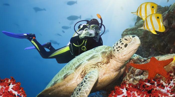 Zelena želva pod vodo - dobil kot maldivi - drugače Sipadan - celebeško morje