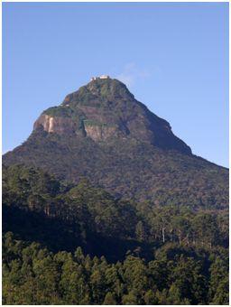 sloni71 - ČILI, SLONI IN ČAJ (Šri Lanka)
