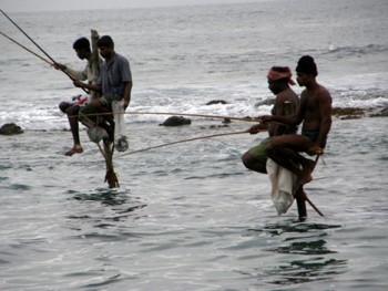 sloni81 350x263 - ČILI, SLONI IN ČAJ (Šri Lanka)