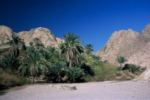 Od faraonov do beduinov