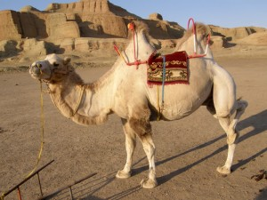 pozerska kamela na dnu jezera