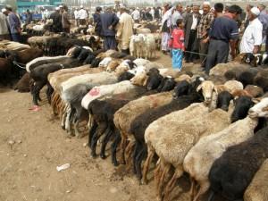 živinska tržnica v Kašgarju