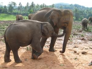 IMG 3847 small 300x225 - Moja doživeta Šrilanka