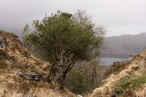 Irska pokrajina-pogled v dolino