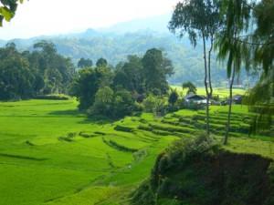 Tana Toraja 1 300x225 - Kdo živi v Tana Toraji?