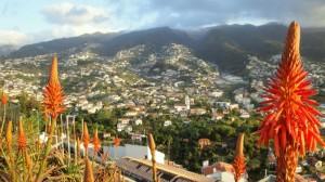 Madeira4 300x168 - Madeira - Otok različnih svetov