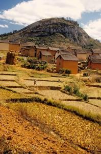 Madagaskar1 198x300 - Kako postati moški?