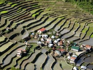 Filipini, riževa polja
