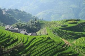 Kitajska riževa polja