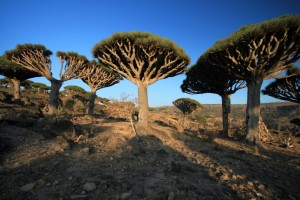 Socotra