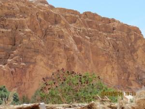 Cvetje v  puščavi