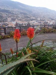 MADEIRA-Barcelos viewpoint, pogled na mesto Funchal s priljubljene razgledne točke