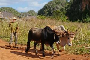 Kuba - Poljedelstvo