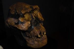 1. V velikem tektonskem jarku so našli najsterejše ostanke naših prednikov