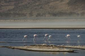 3. Velika slana jezera so dom številnih ptic