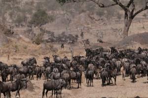 Afriški nomadi