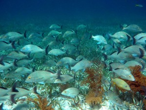 Filipini-ribja jata