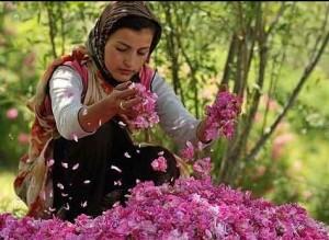 Vrtnice v Iranu