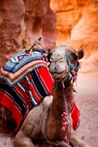 Maroko - kamela