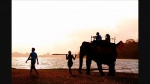 Šrilanka - sloni