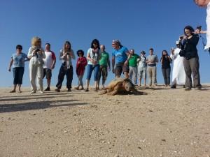 Ras al Jinz - želvje zatočišče