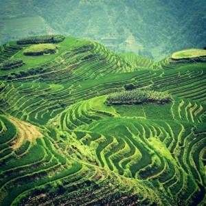 Kitajska - Longji - terasasta riževa polja