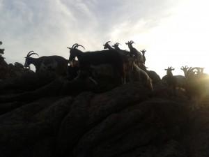iz pohoda na Capu dOrto 3 300x225 - Atraktivna Korzika – vzpon na Capo d'Orto