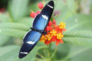Ekvador Mindo 300x200 - Južna Amerika – poezija narave in strast do življenja