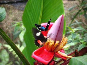 Ekvdor Mindo 300x225 - Južna Amerika – poezija narave in strast do življenja