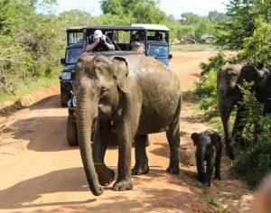 Šrilanka-idila nacionalnega parka Yala