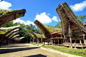 Sulawesi - Otok moci in cutenja