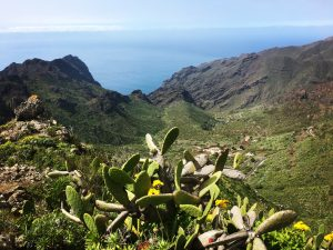Tenerife pot do Masce 300x225 - V ritmu karnevala in salse