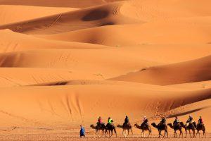 Maroko-puščava kamele