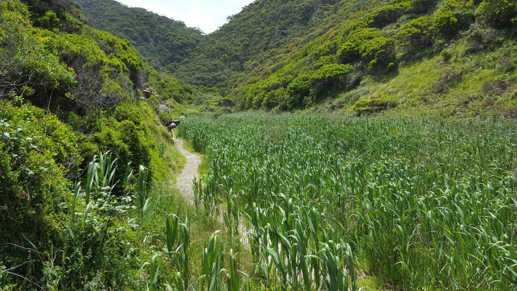 5. Na poti k enemu izmed številnih slapov v narodnem parku Otway