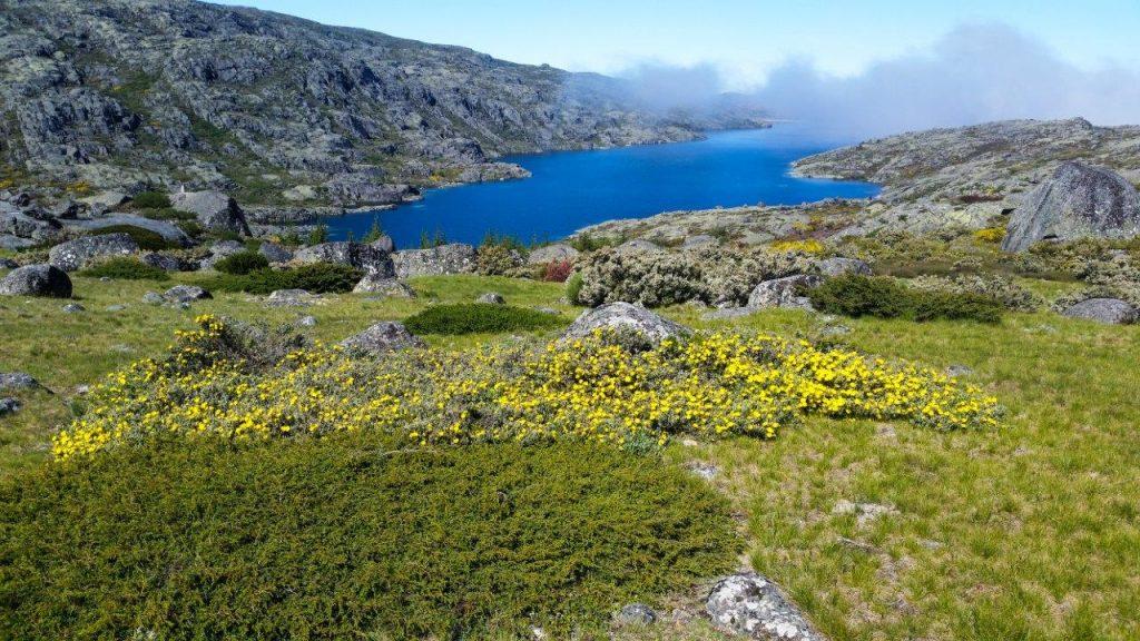 Portugalska-Sierra Estrella