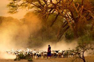 Tanzanija – pastir s kozami