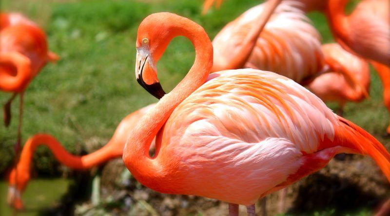 flamingo bird pink nature - PATAGONIJA in EKVADOR,  izjemni deželi za potovalne sladokusce!
