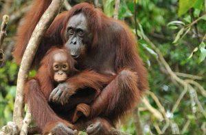 Malezija-Borneo