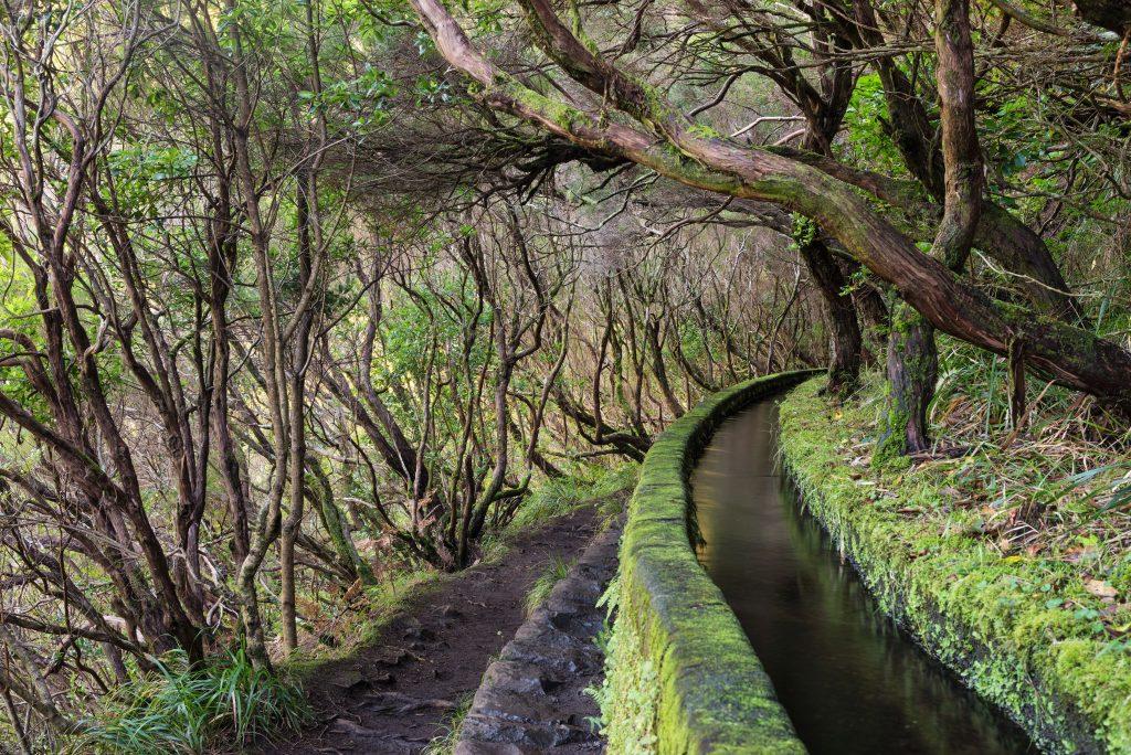 Madeira- levada Rabasal